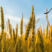 مطالبه ی بهای حق ریشه و نسق زراعی